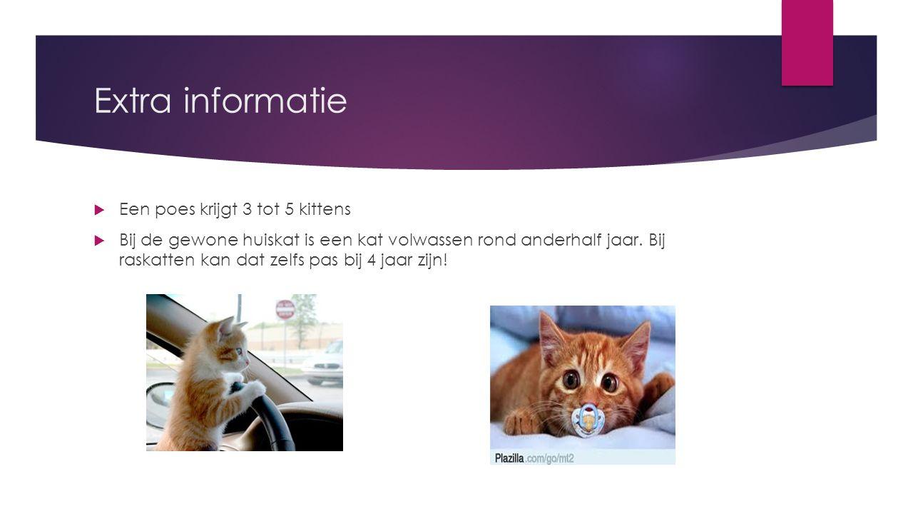 Extra informatie  Een poes krijgt 3 tot 5 kittens  Bij de gewone huiskat is een kat volwassen rond anderhalf jaar. Bij raskatten kan dat zelfs pas b
