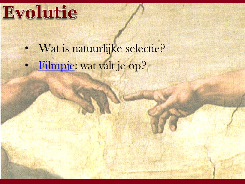 Windesheim zet kennis in werking Wat is natuurlijke selectie Filmpje: wat valt je op Filmpje