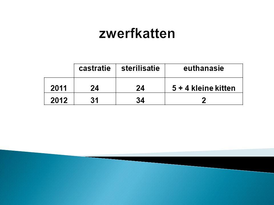 castratiesterilisatieeuthanasie 201124 5 + 4 kleine kitten 201231342