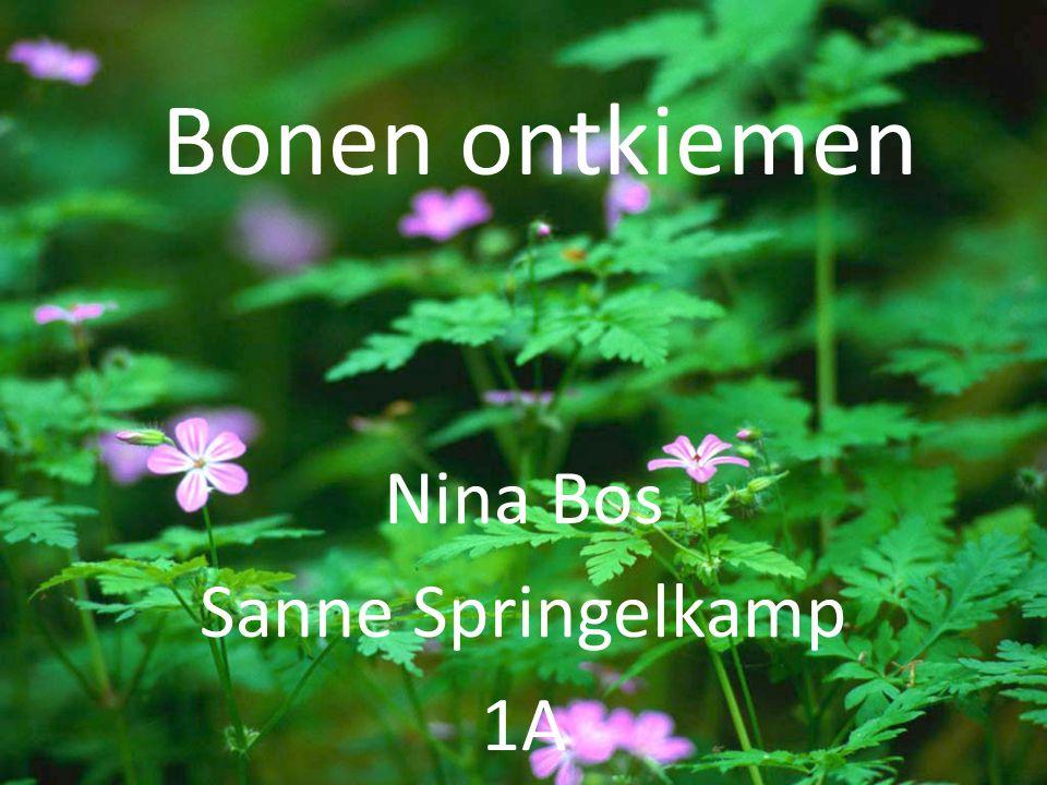 Bonen ontkiemen Nina Bos Sanne Springelkamp 1A