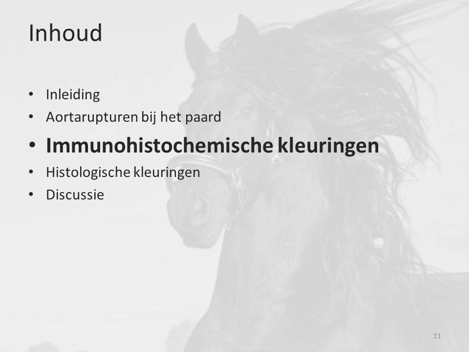 Inhoud Inleiding Aortarupturen bij het paard Immunohistochemische kleuringen Histologische kleuringen Discussie 11