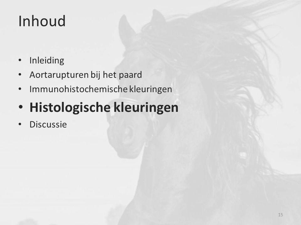 Inhoud Inleiding Aortarupturen bij het paard Immunohistochemische kleuringen Histologische kleuringen Discussie 15