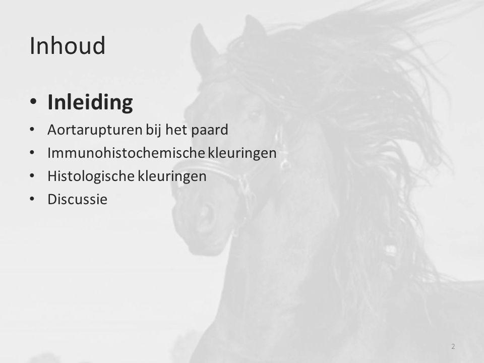 * 13 e eeuw * Inlands paardenras van Nederland * Nauwe stamboom Inleiding Het Friese paard Friese paard Warmbloed paard 3