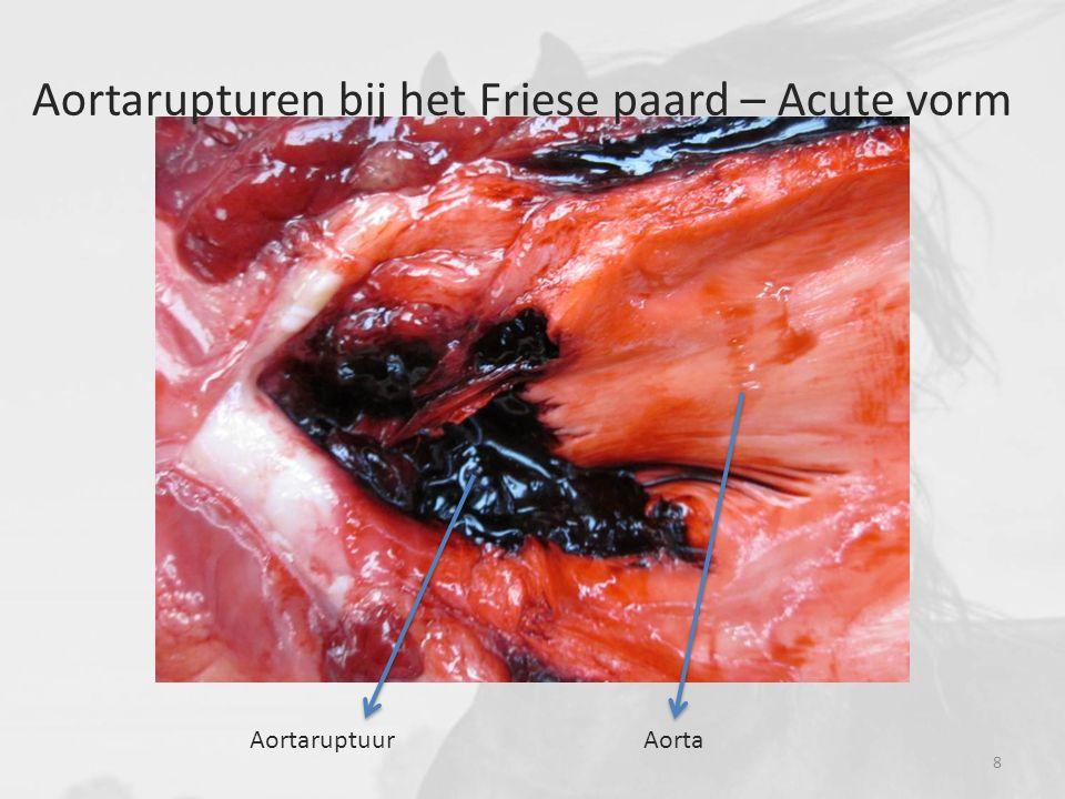 Toename van de collageenvezels in de tunica media van de aortawand Histologische kleuringen Resultaten Von Gieson voor collageen en spierweefsel 19