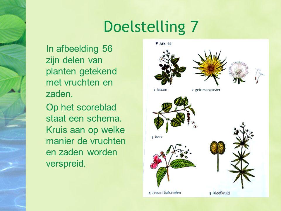 Doelstelling 7 In afbeelding 56 zijn delen van planten getekend met vruchten en zaden. Op het scoreblad staat een schema. Kruis aan op welke manier de