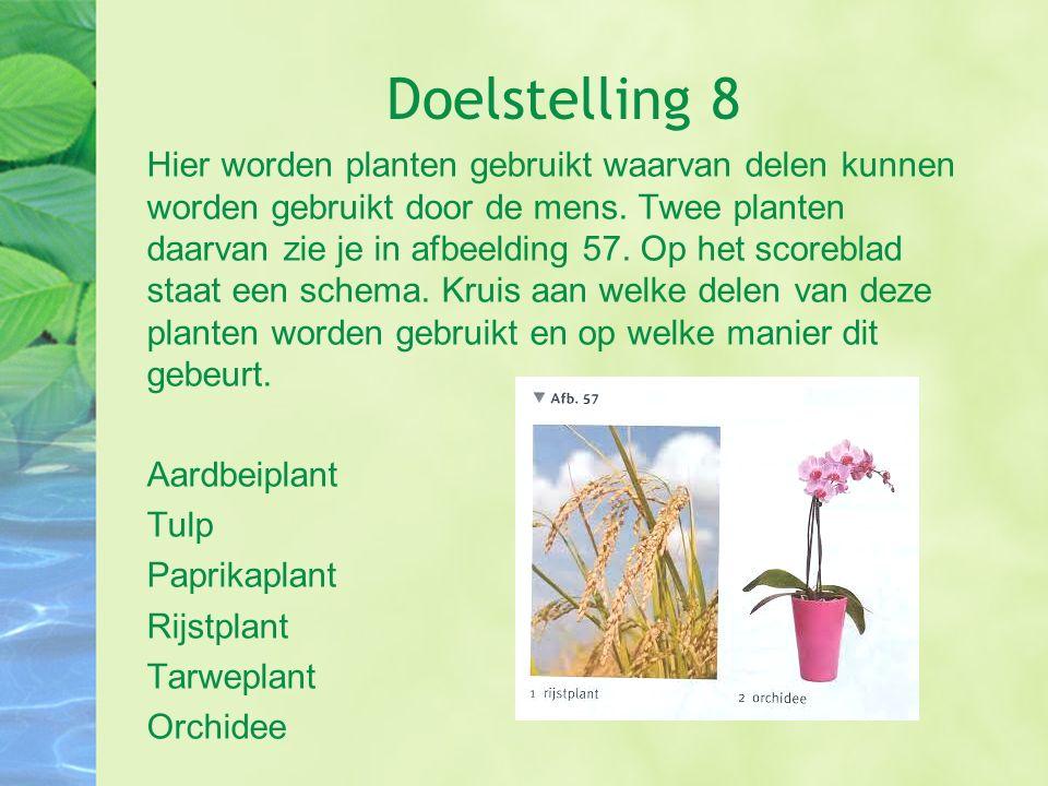 Doelstelling 8 Hier worden planten gebruikt waarvan delen kunnen worden gebruikt door de mens. Twee planten daarvan zie je in afbeelding 57. Op het sc