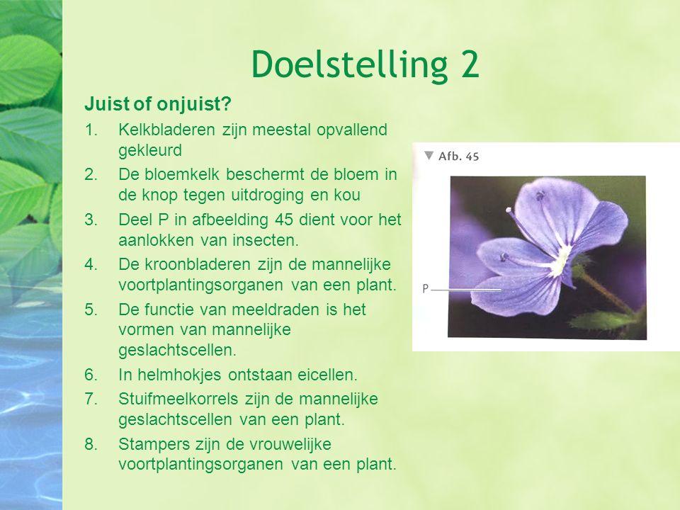 Doelstelling 2 Juist of onjuist? 1.Kelkbladeren zijn meestal opvallend gekleurd 2.De bloemkelk beschermt de bloem in de knop tegen uitdroging en kou 3