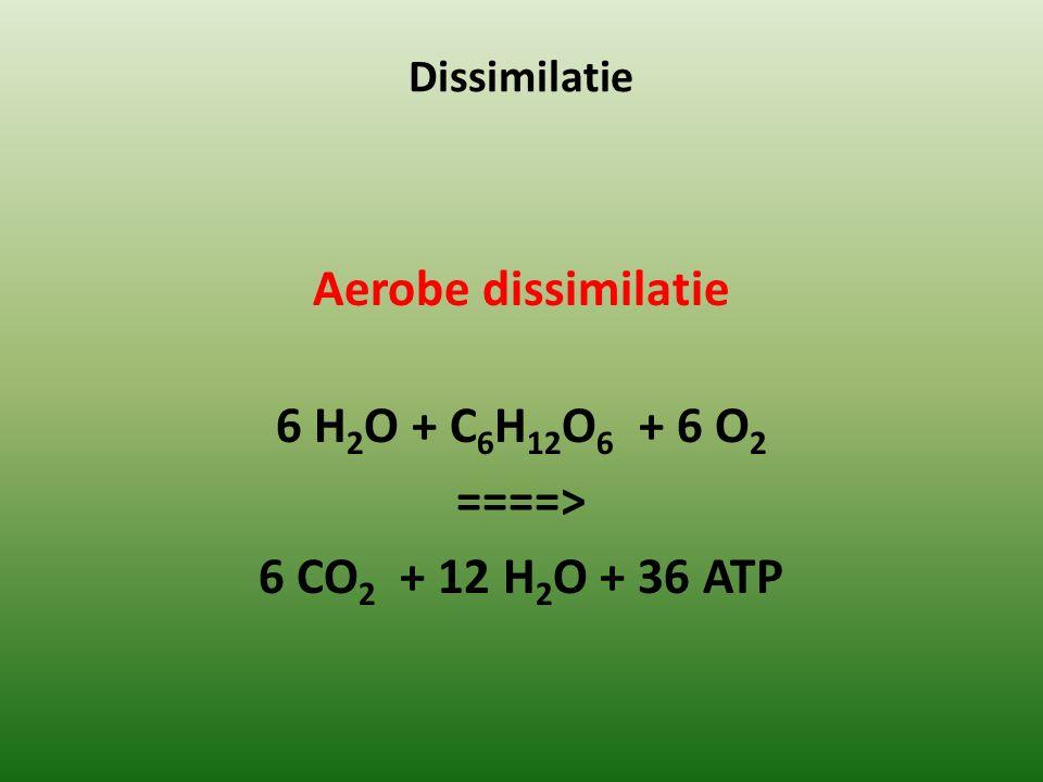 Dissimilatie Aerobe dissimilatie 6 H 2 O + C 6 H 12 O 6 + 6 O 2 ====> 6 CO 2 + 12 H 2 O + 36 ATP