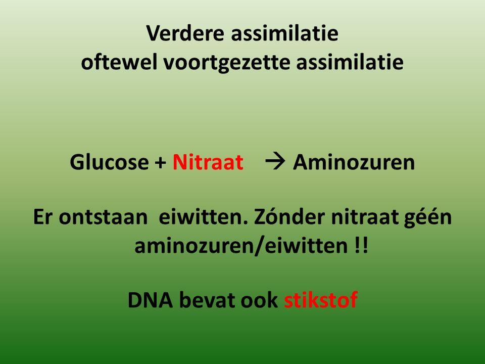 Verdere assimilatie oftewel voortgezette assimilatie Glucose + Nitraat  Aminozuren Er ontstaan eiwitten. Zónder nitraat géén aminozuren/eiwitten !! D