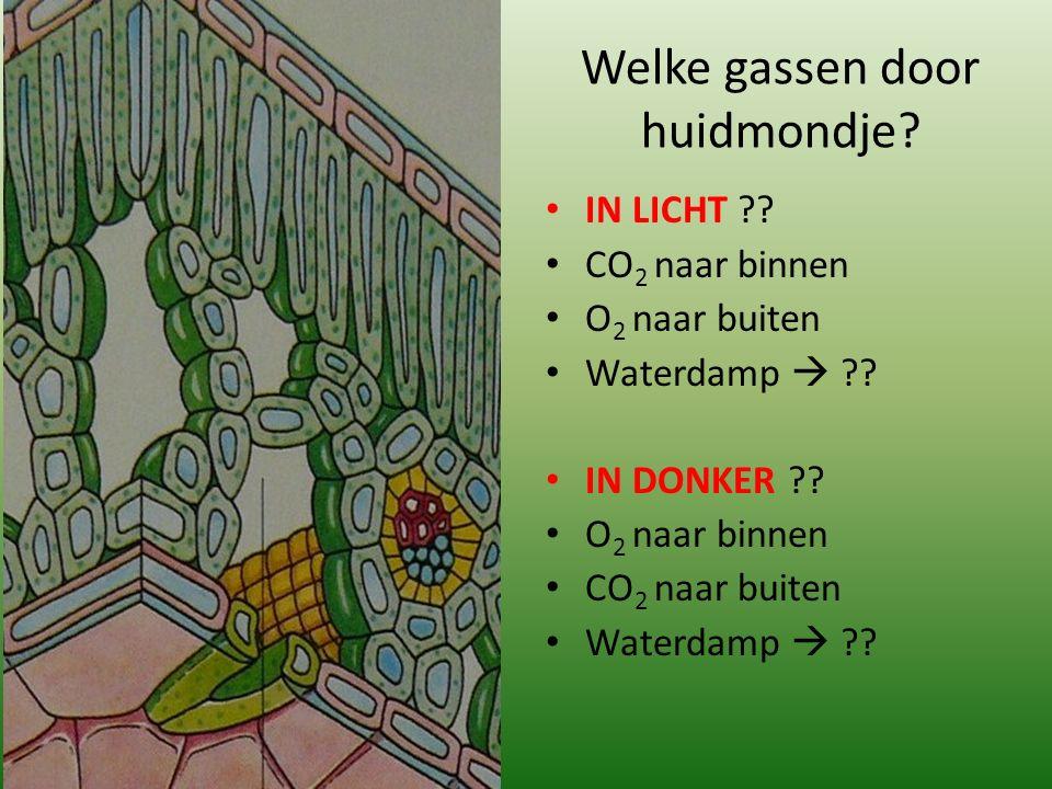 Welke gassen door huidmondje? IN LICHT ?? CO 2 naar binnen O 2 naar buiten Waterdamp  ?? IN DONKER ?? O 2 naar binnen CO 2 naar buiten Waterdamp  ??