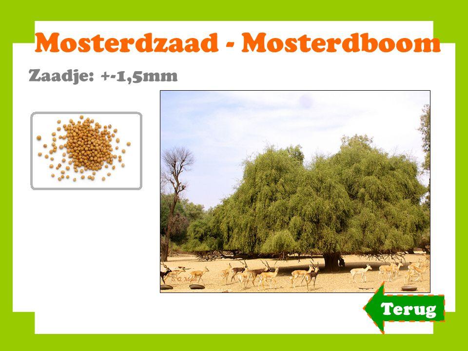 Mosterdzaad - Mosterdboom Zaadje: +-1,5mm Terug