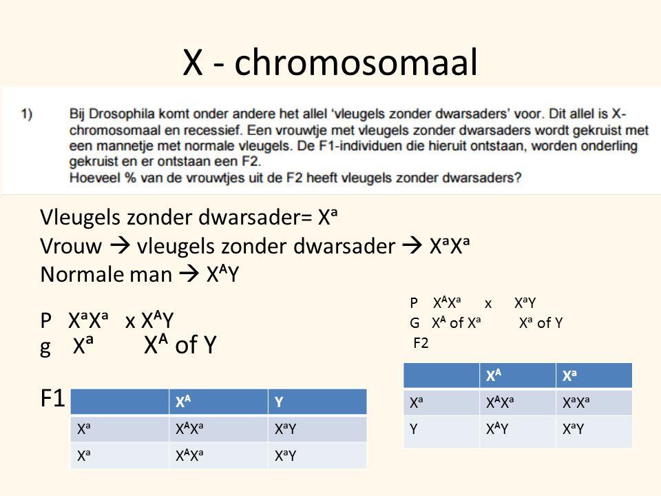 X - chromosomaal Vleugels zonder dwarsader= Xᵃ Vrouw  vleugels zonder dwarsader  XᵃXᵃ Normale man  XᴬY P XᵃXᵃ x XᴬY g X ᵃ Xᴬ of Y F1 XᴬY XᵃXᴬXᵃXᵃY XᵃXᴬXᵃXᵃY P XᴬXᵃ x XᵃY G Xᴬ of Xᵃ Xᵃ of Y F2 XᴬXᵃ XᴬXᵃXᵃXᵃ YXᴬYXᵃY
