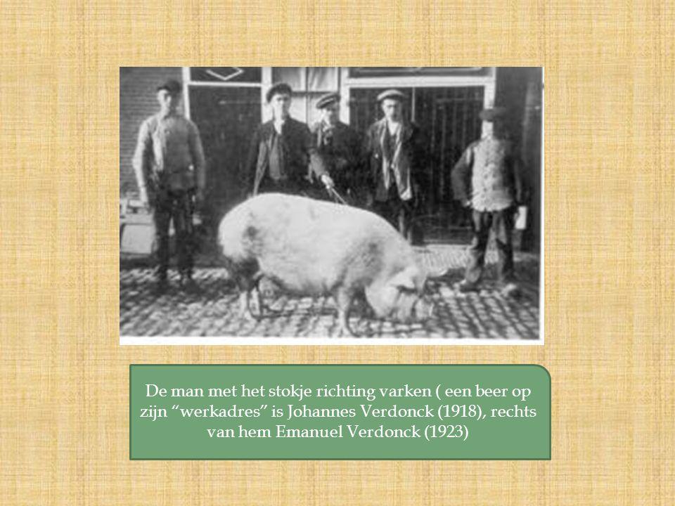 De man met het stokje richting varken ( een beer op zijn werkadres is Johannes Verdonck (1918), rechts van hem Emanuel Verdonck (1923)