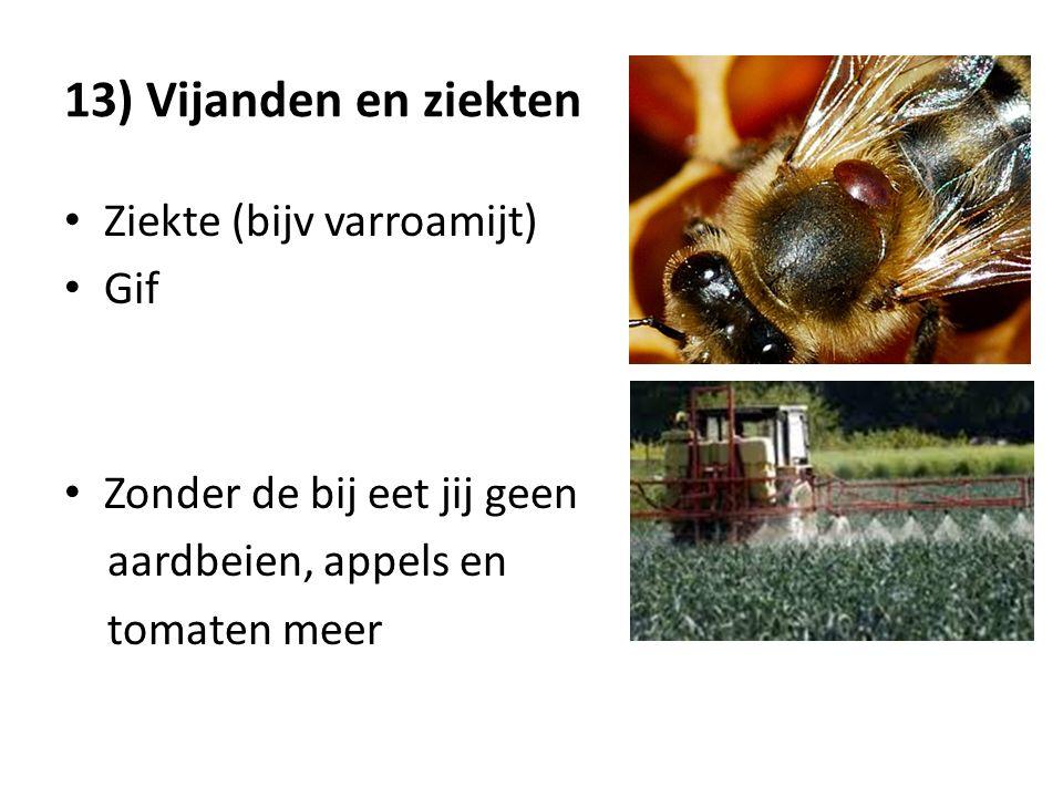 13) Vijanden en ziekten Ziekte (bijv varroamijt) Gif Zonder de bij eet jij geen aardbeien, appels en tomaten meer