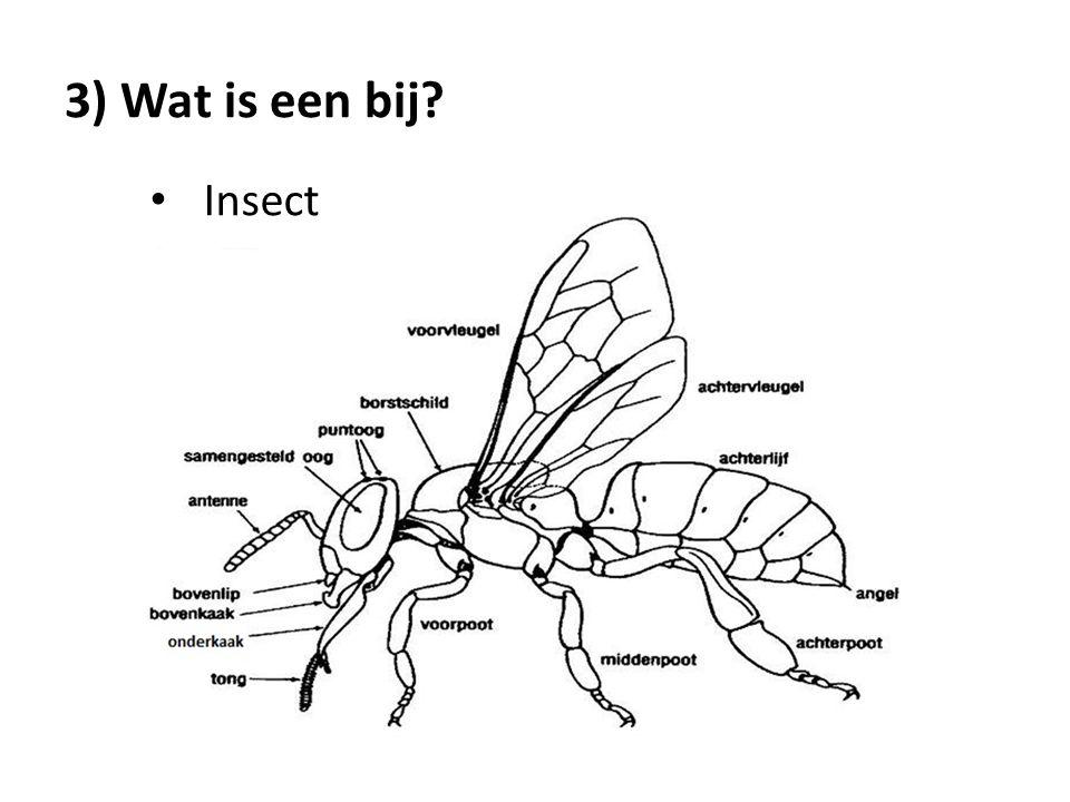 3) Wat is een bij? Insect