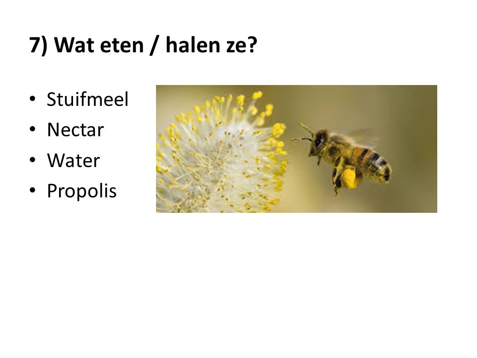 7) Wat eten / halen ze? Stuifmeel Nectar Water Propolis