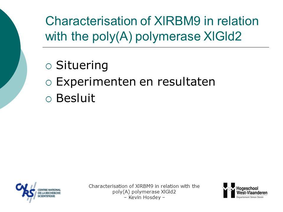 Situering – Inleiding & doelstelling  Regulatie van proteïnetranslatie tijdens de celcyclus Translatiecontrole op proteïnen waarvan de synthese noodzakelijk is voor meiotische maturatie Expressie en de functie van leden van het polyadenylatiecomplex Characterisation of XlRBM9 in relation with the poly(A) polymerase XlGld2 – Kevin Hosdey –