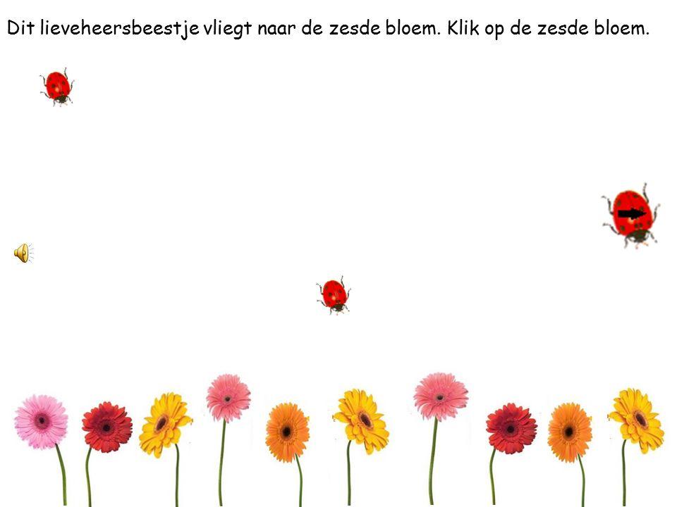 Dit lieveheersbeestje vliegt naar de eerste bloem. Klik op de eerste bloem.