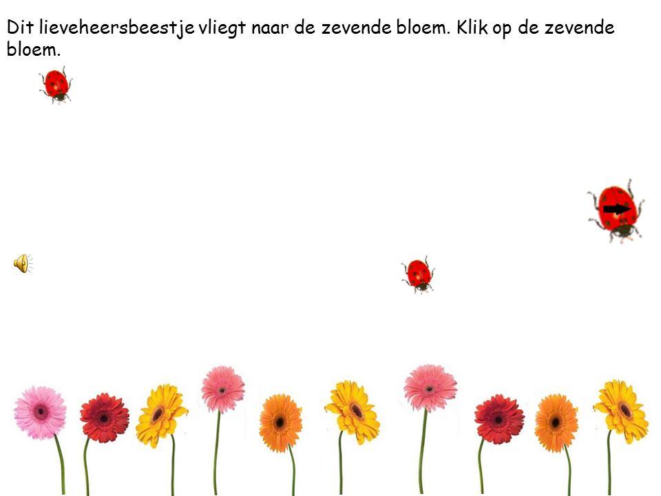 Dit lieveheersbeestje vliegt naar de achtste bloem. Klik op de achtste bloem.