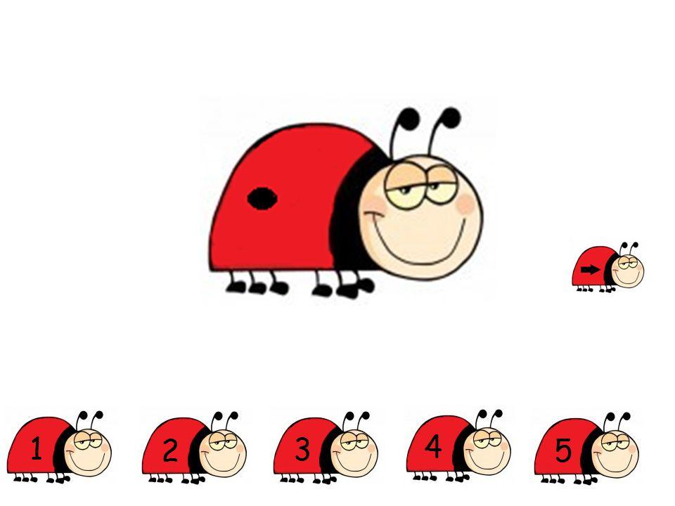 Op welke foto zie je meer dan 1 lieveheersbeestje?