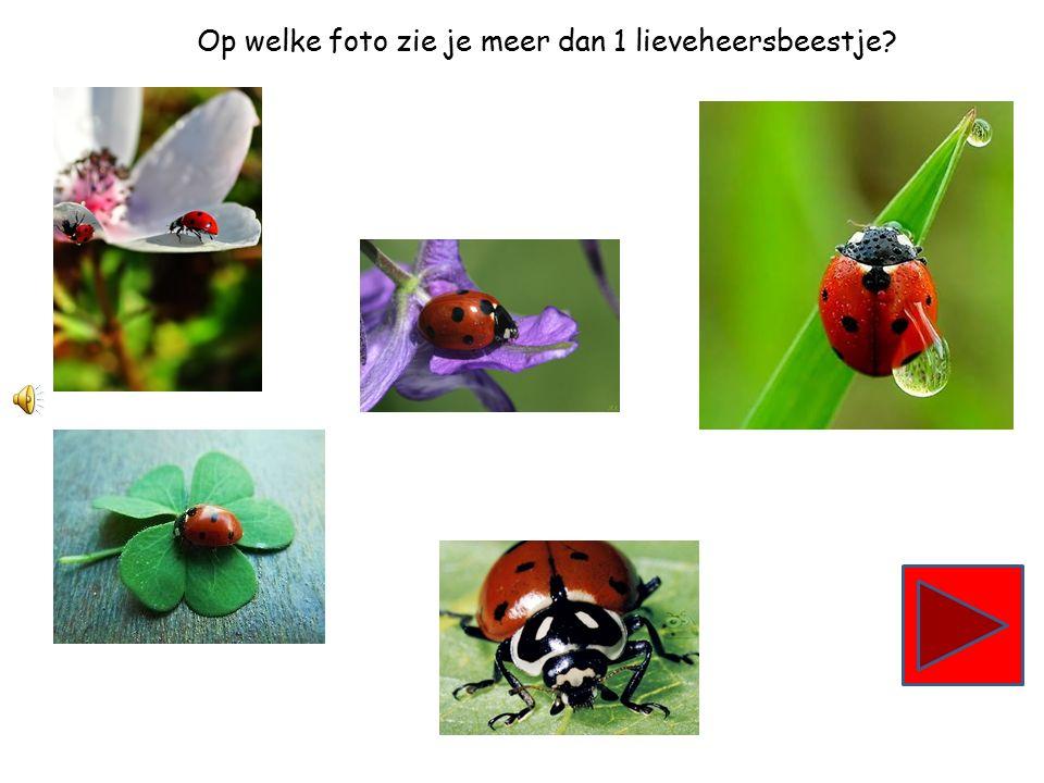 Op welke foto zie je minder dan 3 lieveheersbeestjes