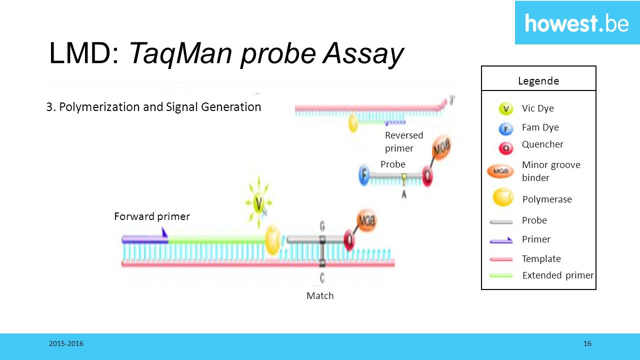LMD: TaqMan probe Assay 2015-201616 Legende Vic Dye Fam Dye Quencher Minor groove binder Polymerase Probe Primer Template Extended primer Forward prim