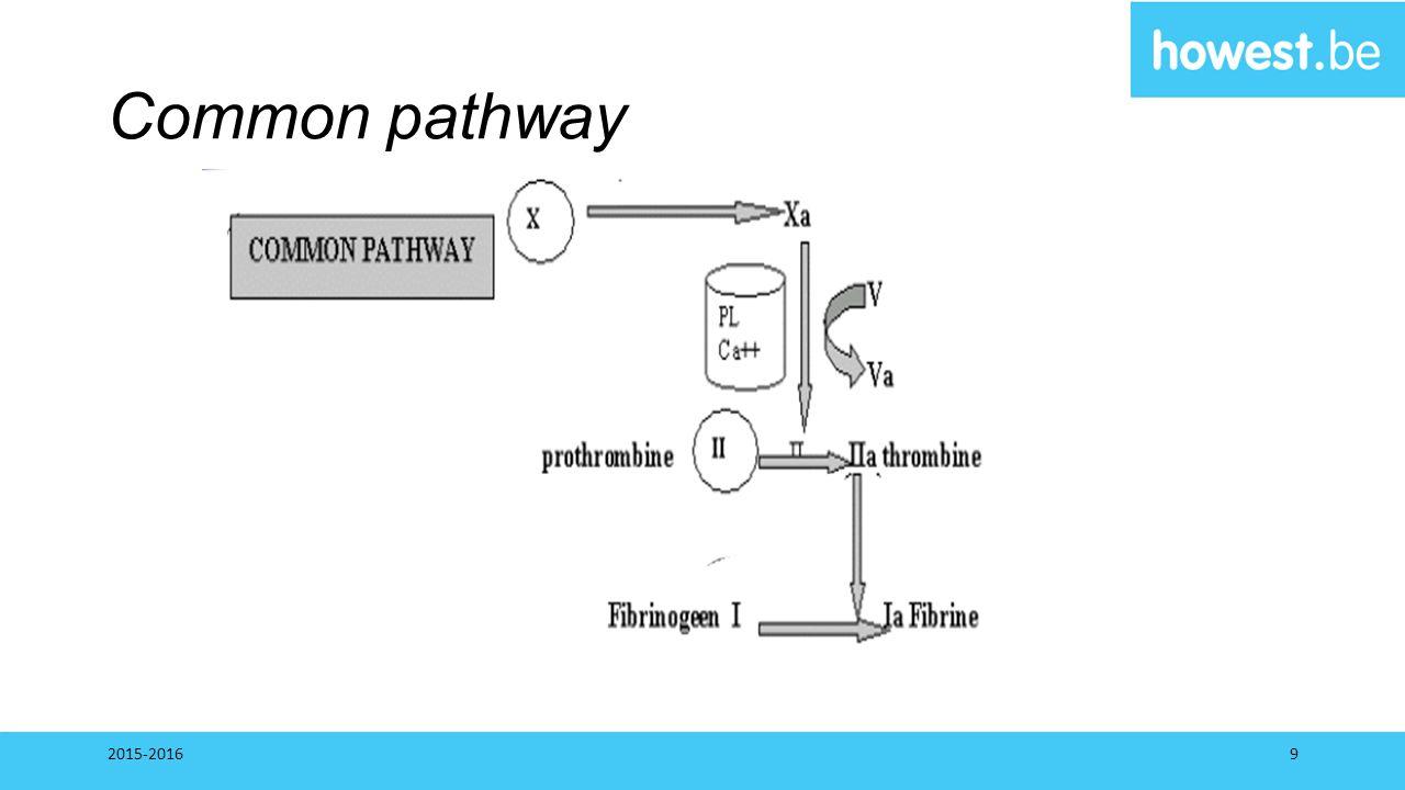 Common pathway 2015-20169
