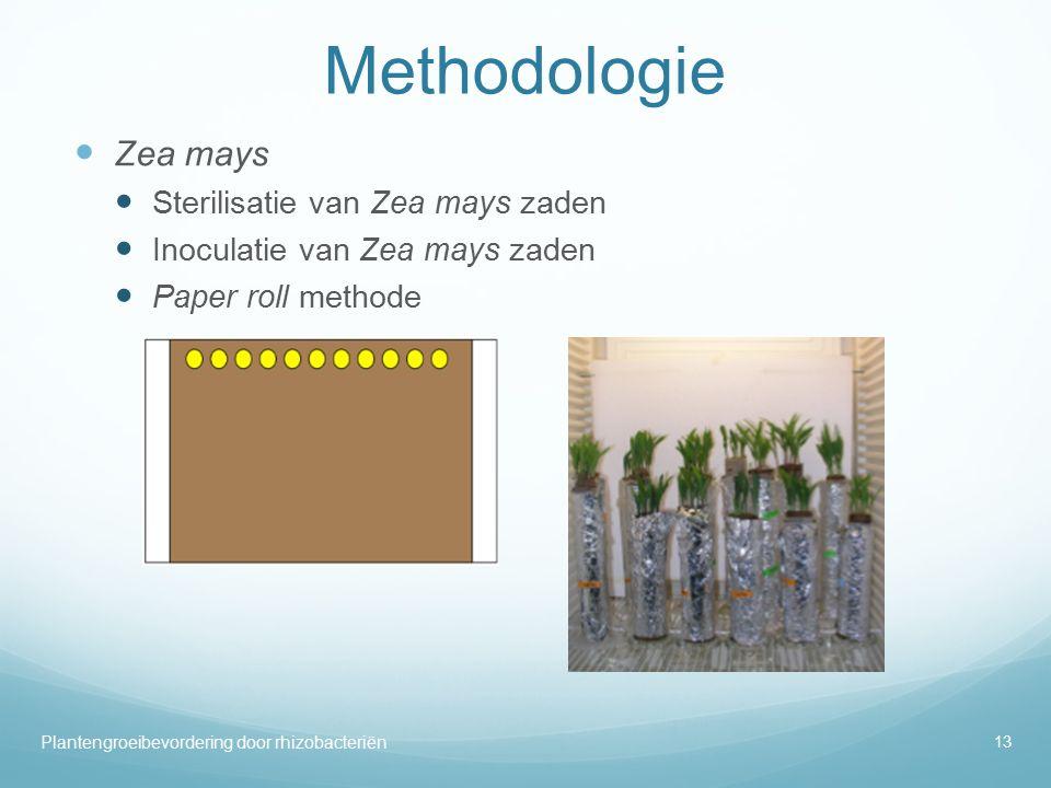 Methodologie Zea mays Sterilisatie van Zea mays zaden Inoculatie van Zea mays zaden Paper roll methode 13 Plantengroeibevordering door rhizobacteriën
