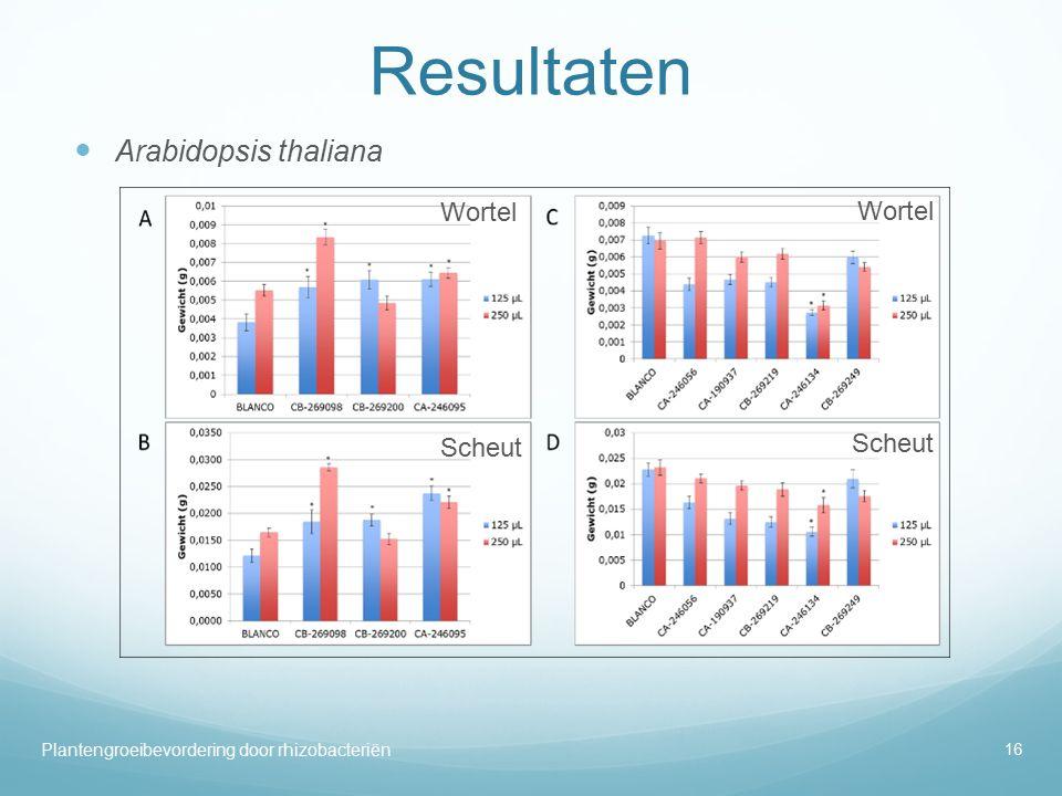 Resultaten Arabidopsis thaliana Plantengroeibevordering door rhizobacteriën 16 Wortel Scheut