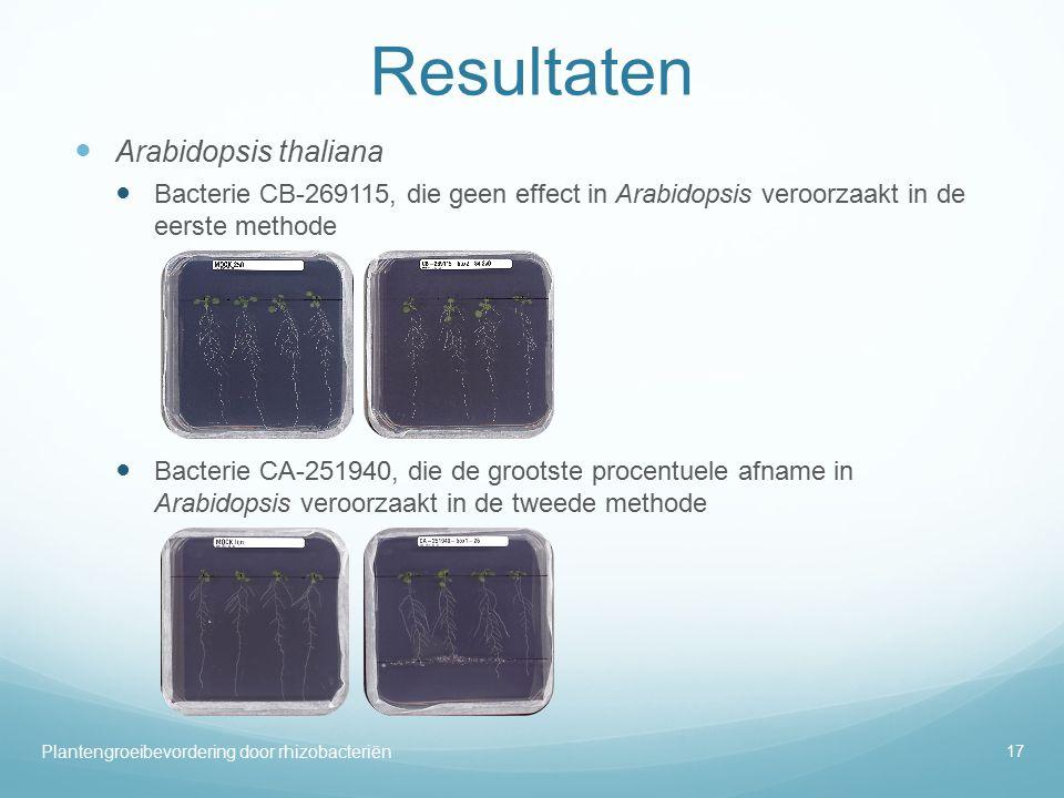 Resultaten Arabidopsis thaliana Bacterie CB-269115, die geen effect in Arabidopsis veroorzaakt in de eerste methode Bacterie CA-251940, die de grootste procentuele afname in Arabidopsis veroorzaakt in de tweede methode Plantengroeibevordering door rhizobacteriën 17