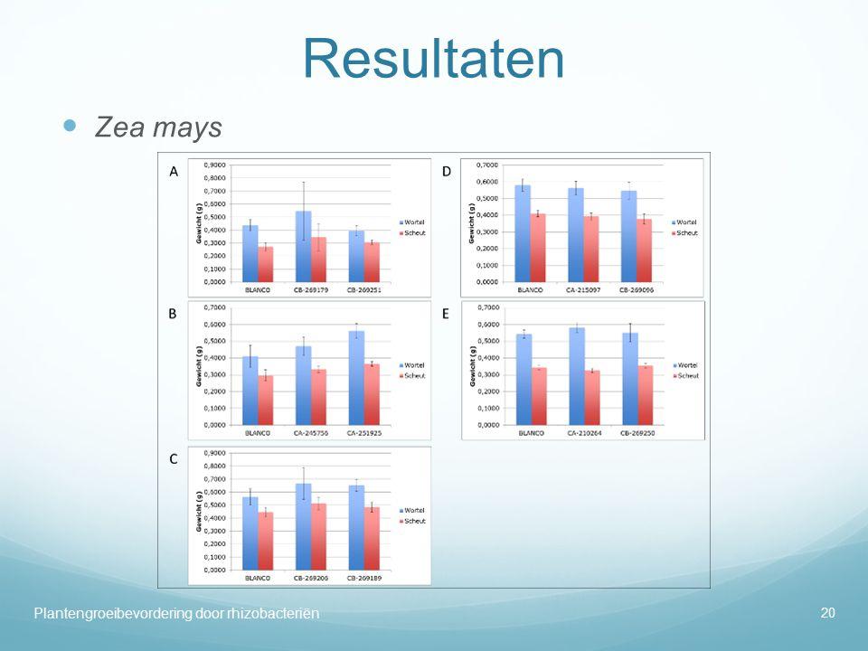 Resultaten Zea mays 20 Plantengroeibevordering door rhizobacteriën