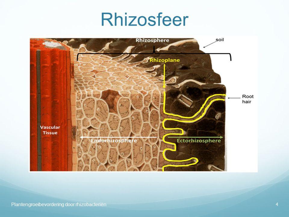 Rhizosfeer Plantengroeibevordering door rhizobacteriën 4