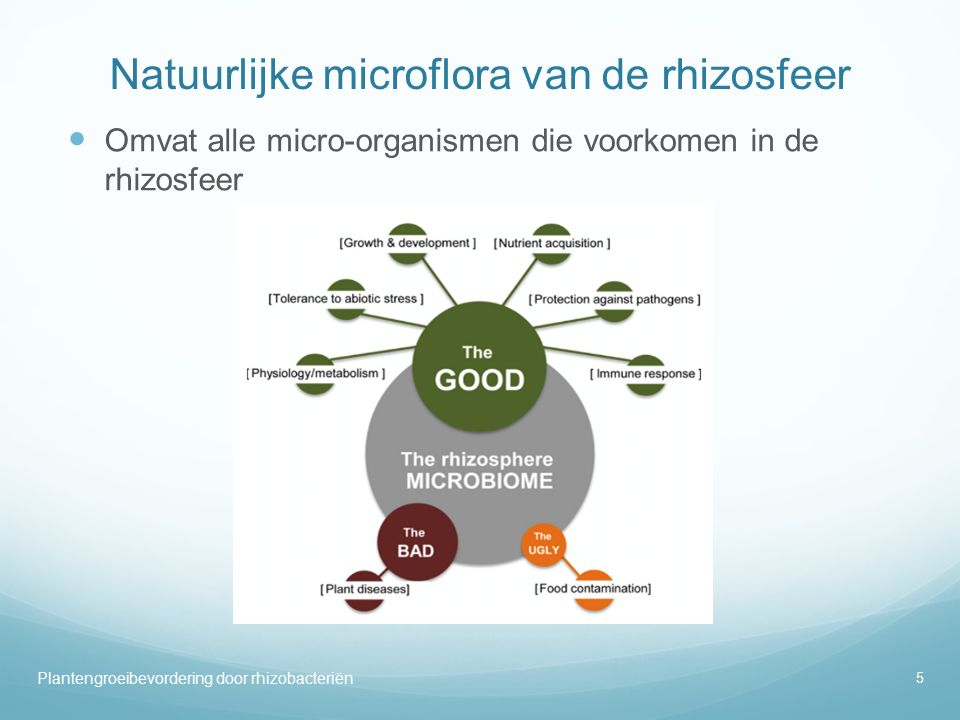 Natuurlijke microflora van de rhizosfeer Omvat alle micro-organismen die voorkomen in de rhizosfeer 5 Plantengroeibevordering door rhizobacteriën