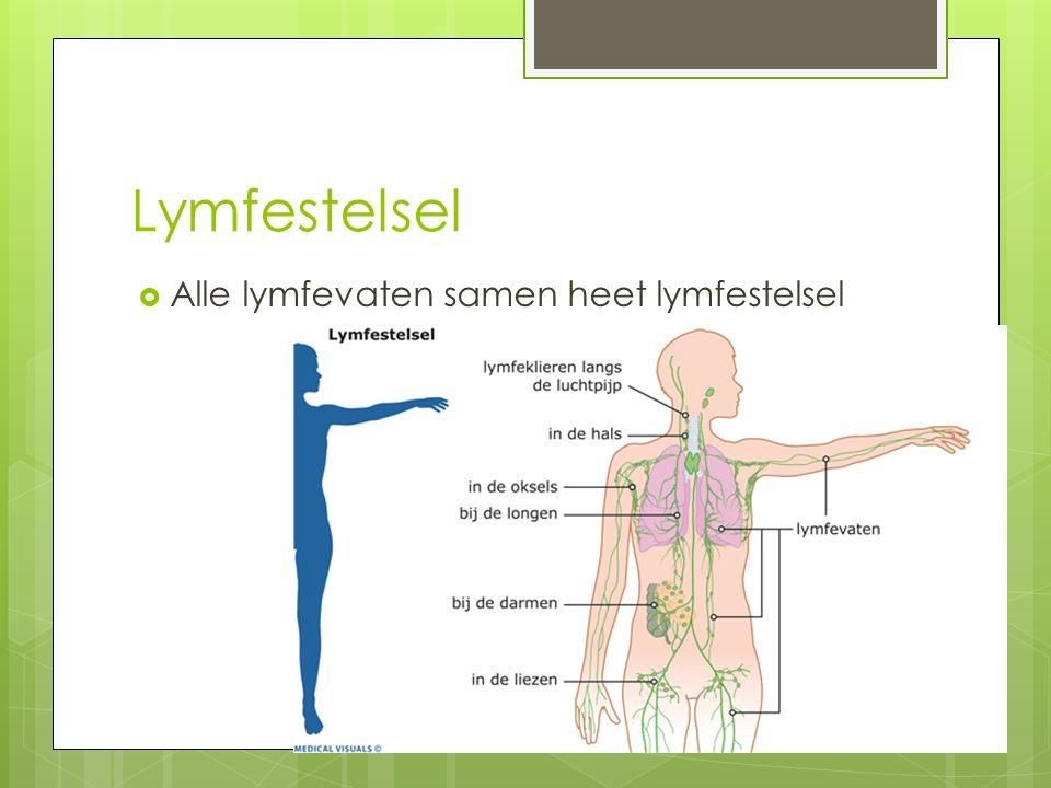 Lymfestelsel  Lijkt op bloedvatenstelsel  Dunne wanden  Lage druk  Bevat kleppen  Bij de sleutelbeenderen komt de lymfe in het bloed