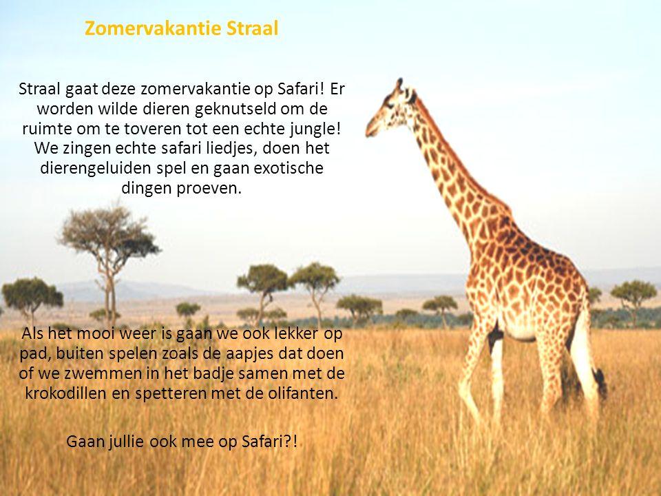 Zomervakantie Straal Straal gaat deze zomervakantie op Safari! Er worden wilde dieren geknutseld om de ruimte om te toveren tot een echte jungle! We z