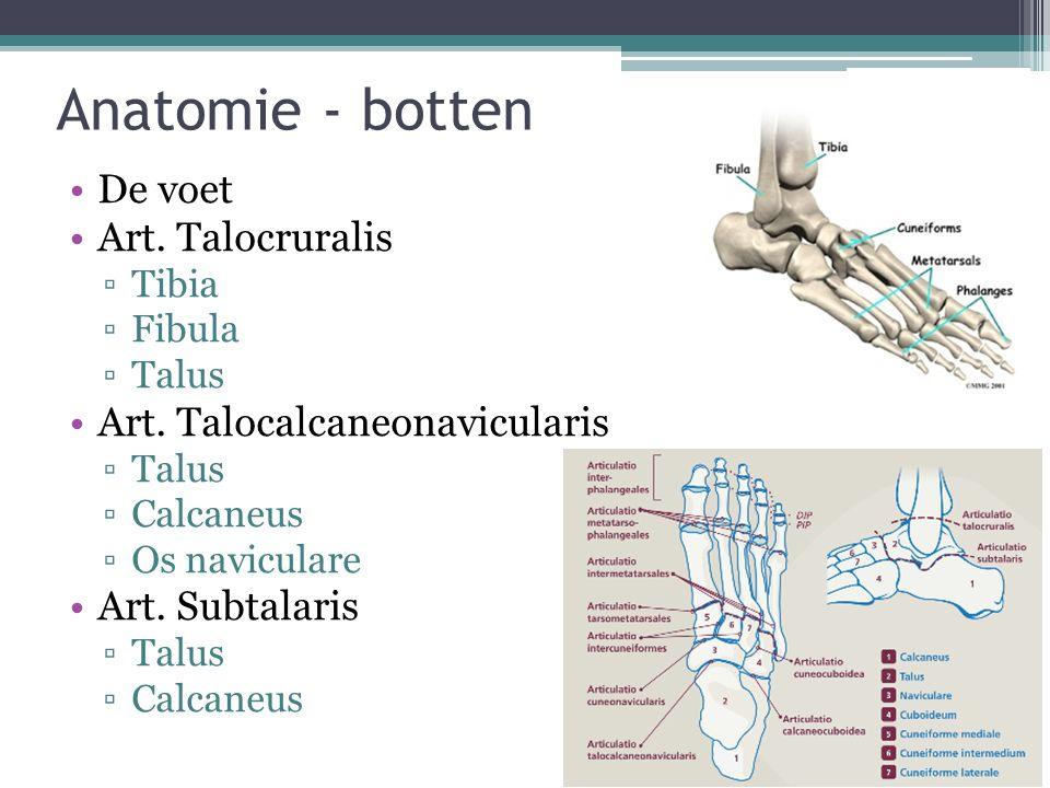 Anatomie - ligamenten Lig.