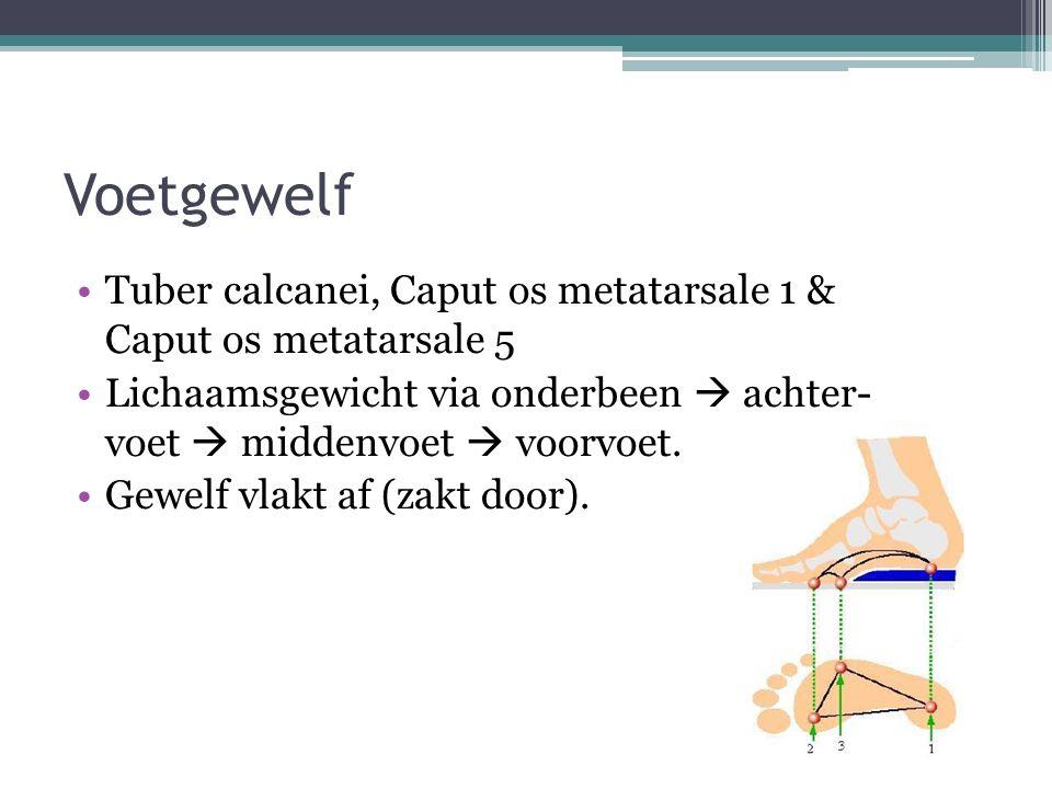 Voetgewelf Tuber calcanei, Caput os metatarsale 1 & Caput os metatarsale 5 Lichaamsgewicht via onderbeen  achter- voet  middenvoet  voorvoet. Gewel