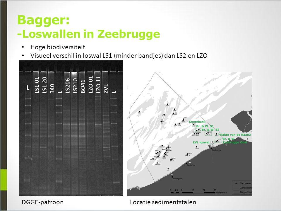 Bagger: -Loswallen in Zeebrugge DGGE-patroonLocatie sedimentstalen Hoge biodiversiteit Visueel verschil in loswal LS1 (minder bandjes) dan LS2 en LZO