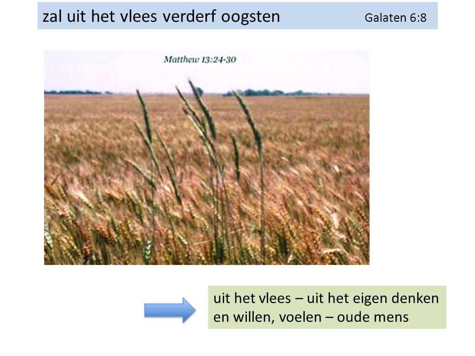 zal uit het vlees verderf oogsten Galaten 6:8 uit het vlees – uit het eigen denken en willen, voelen – oude mens