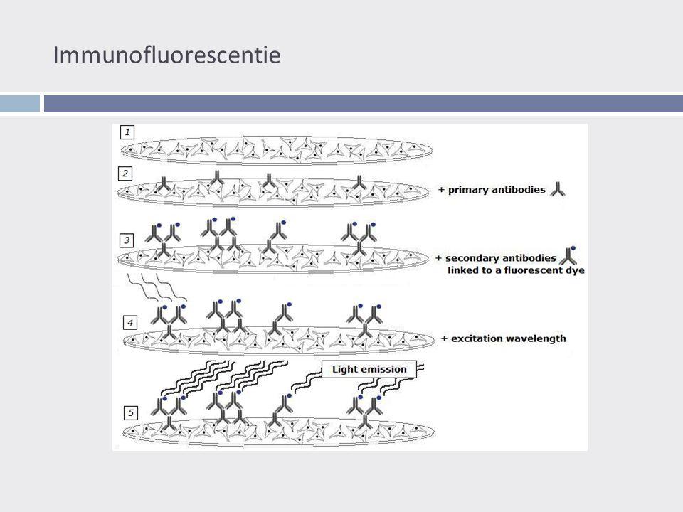 Immunofluorescentie