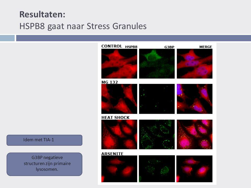 Resultaten: HSPB8 gaat naar Stress Granules Idem met TIA-1 G3BP negatieve structuren zijn primaire lysosomen.
