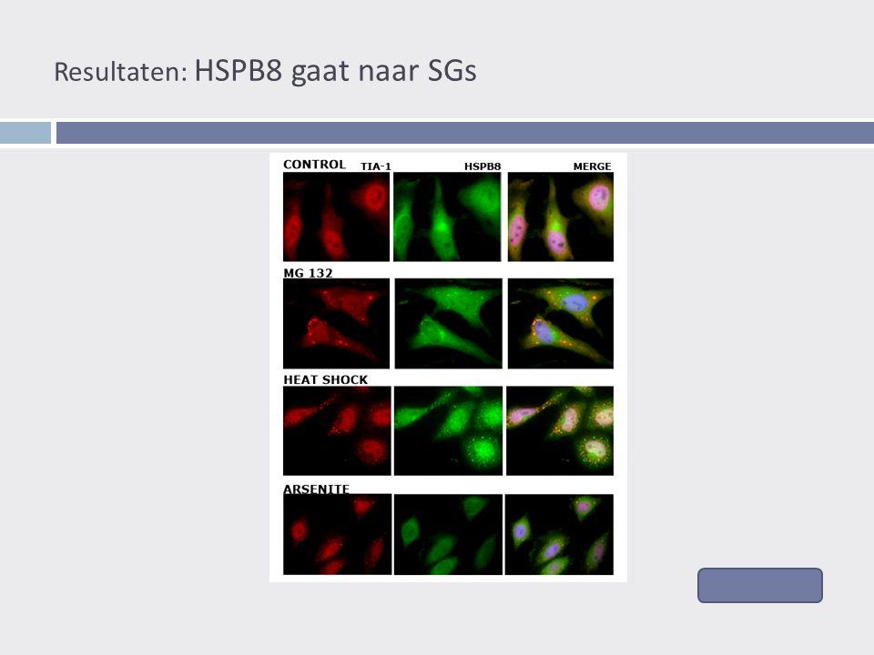 Resultaten: HSPB8 gaat naar SGs