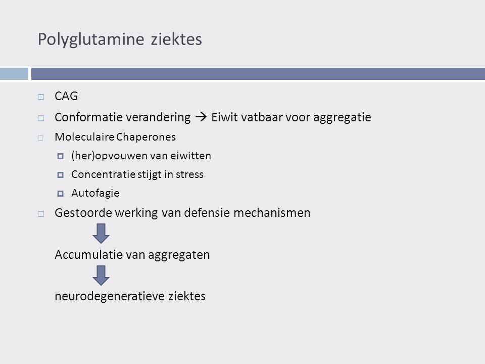 Polyglutamine ziektes  CAG  Conformatie verandering  Eiwit vatbaar voor aggregatie  Moleculaire Chaperones  (her)opvouwen van eiwitten  Concentratie stijgt in stress  Autofagie  Gestoorde werking van defensie mechanismen Accumulatie van aggregaten neurodegeneratieve ziektes