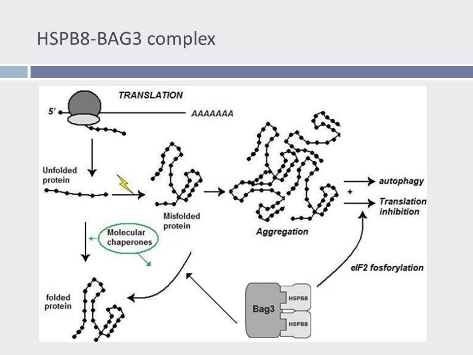 Stress Granules : translatie controle in stress condities  Eiwit aggregaten = stress voor de cel  Translatie inhibitie = ophoping mRNA  Stress granules  mRNA en geassocieerde proteïnen  Sortering van mRNA  Ook gevormd bij  Heat shock  Oxidatieve stress  Proteasoom inhibitie  …
