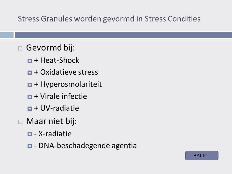 Stress Granules worden gevormd in Stress Condities  Gevormd bij:  + Heat-Shock  + Oxidatieve stress  + Hyperosmolariteit  + Virale infectie  + UV-radiatie  Maar niet bij:  - X-radiatie  - DNA-beschadegende agentia BACK