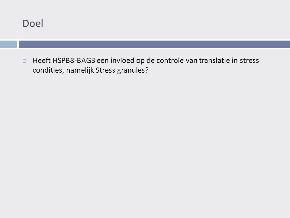 Doel  Heeft HSPB8-BAG3 een invloed op de controle van translatie in stress condities, namelijk Stress granules