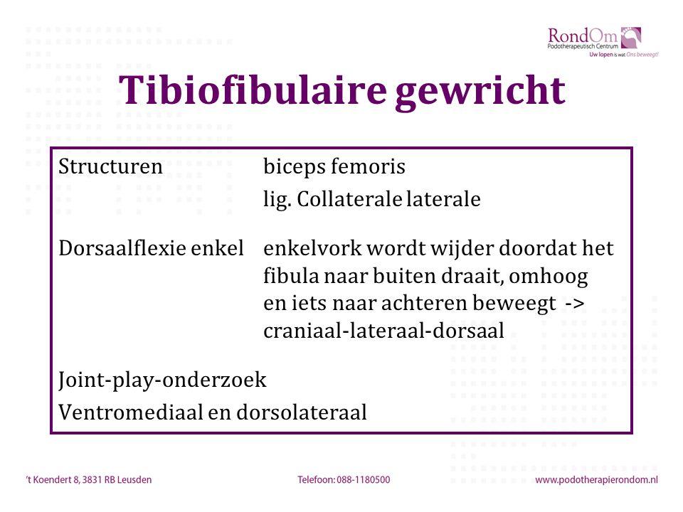Tibiofibulaire gewricht Structurenbiceps femoris lig. Collaterale laterale Dorsaalflexie enkelenkelvork wordt wijder doordat het fibula naar buiten dr