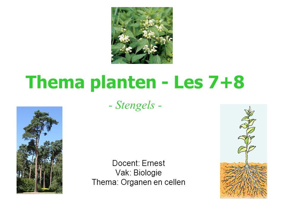Thema planten - Les 7+8 - Stengels - Docent: Ernest Vak: Biologie Thema: Organen en cellen