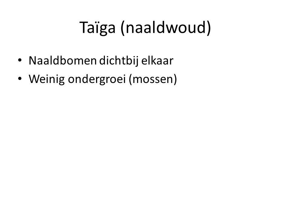 Taïga (naaldwoud) Naaldbomen dichtbij elkaar Weinig ondergroei (mossen)