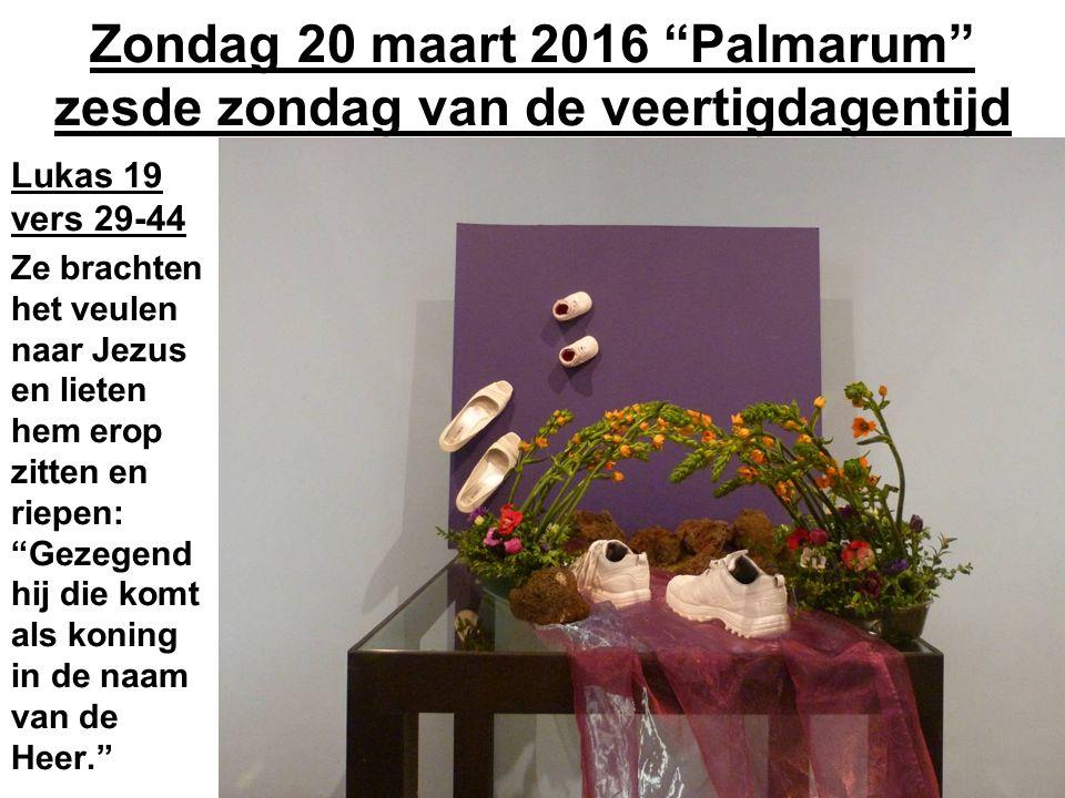 Zondag 20 maart 2016 Palmarum zesde zondag van de veertigdagentijd Lukas 19 vers 29-44 Ze brachten het veulen naar Jezus en lieten hem erop zitten en riepen: Gezegend hij die komt als koning in de naam van de Heer.